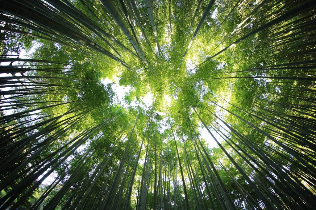 Public consultation on Education for Environmental Sustainability